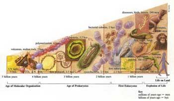 ATHEIS dan LOGIKA Evolusi2
