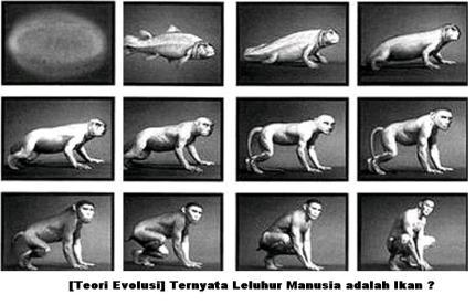 evolusi1