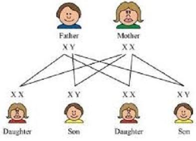 kromosom3